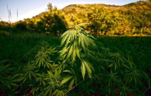 Operazioni antidroga: arrestati due ragazzi per spaccio di marijuana e un 42enne per detenzione di cocaina