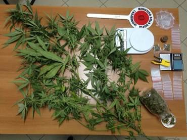 Coltivazione di droga: fermati due 28enni in possesso di piante di marijuana