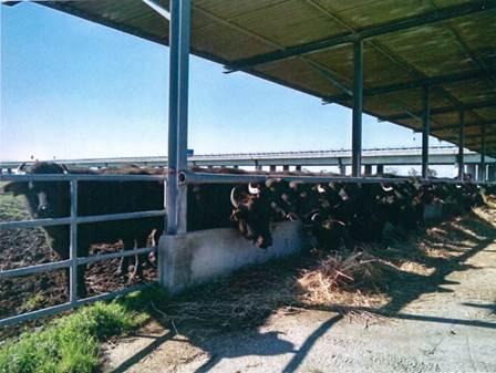 Blitz dei Carabinieri del Nucleo Operativo Ecologico di Caserta in diverse aziende dalla Provincia