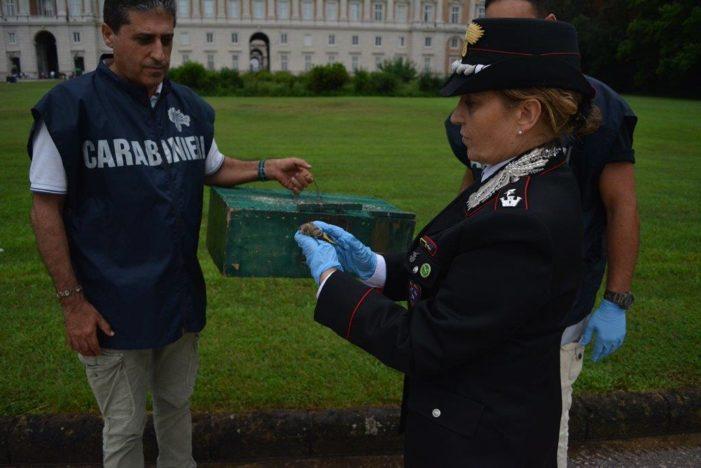 Arrestato in flagranza di reato mentre catturava cardellini