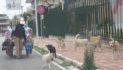 """Ennesimo caso di """"aggressione"""" da parte dei cani randagi ai danni di un passante in viale Kennedy"""