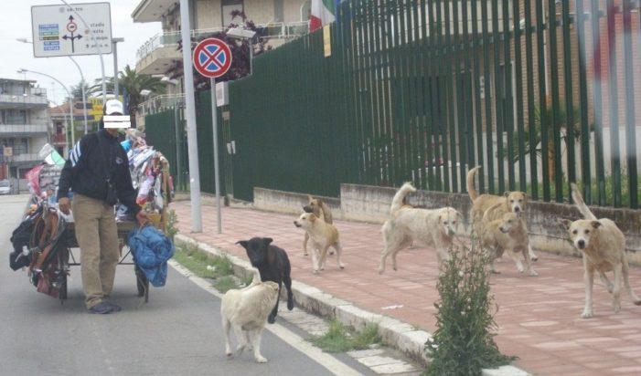 Randagismo, Rosanna Scialdone è soddisfatta per l'incontro tra le animaliste ed il Sindaco Russo