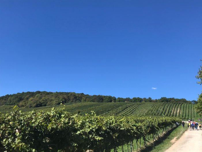 """Camigliano, prenderà il via il 6 e 7 ottobre la rassegna regionale """"Sentieri del vino"""""""