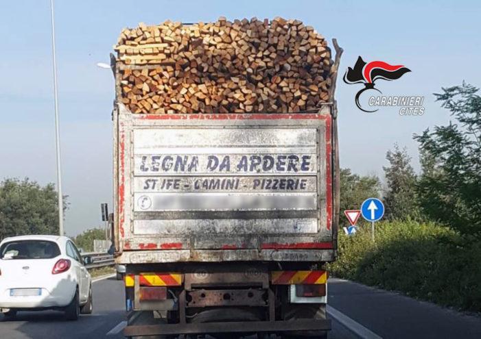 Controllo sulla legna derivante da illegal logging ed utilizzata nelle pizzerie: comminate multe per 200mila euro