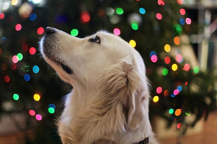 Regali di Natale perfetti per chi ama gli animali