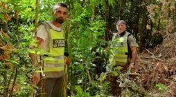 Calvi, sequestrata una piantagione di cannabis indica con oltre 100 piante